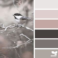 SnapWidget | today's inspiration image for { perched tones } is by @julie_audet ... thank you, Julie, for another *incredible* #SeedsColor image share!