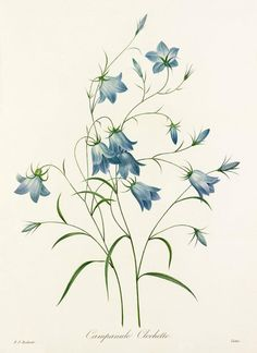 Beautiful Royal Horticultural Society floral prints from Easyart | Flowerona