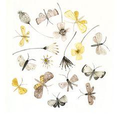 Art print Moths and Flowers natural history watercolor illustration digital print via Etsy.
