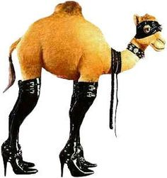 """Happy Happy Hump Day!!!!  She/He is a """"Prosti-Camel"""" for Halloween this year. Isn't that adorable???"""