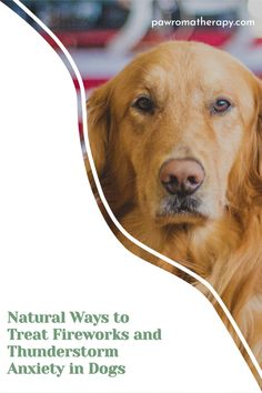 Here are some things that you can do at home that will help if your pet suffers from thunderstorm and fireworks anxiety #anxietyindogs#thunderstormanxiety#fireworksanxiety#goldenretriever Dog Anxiety, Healthy Pets, Pet Tips, Diy Stuffed Animals, Thunderstorms, Dog Quotes, Pet Health, Pet Care, Fireworks