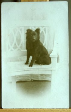Antique dog postcard - real photograph of sender s dog - unique! c1910