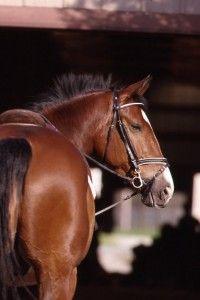 Disaster Preparedness for the Horse Owner