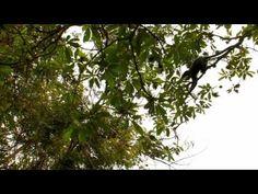 Portail Jembala : Parc National de la Garamba - République Démocratique ...