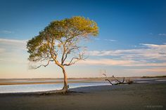 mangrove | Ben Messina Landscape and Nature Photography