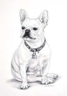 "French Bulldog Sitting Art Dog Print in 8""x10"" Mat from Original Pencil Drawing by P. Tarlow"