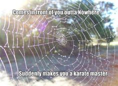 karate master funny quotes quote lol funny quote funny quotes humor spider web @Victoria Mizzell
