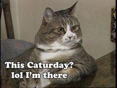 Whee!  Caturday!!