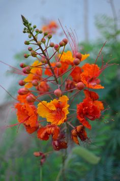 Flores de Israel