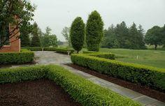 haie de jardin et clôture végétale
