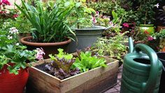 Want to grow your own food but don't have any land to speak of? Here's how to raise your veggies in pots that can sit pretty on a porch or even a fire escape.