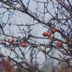 More plant details from Short Hills Park🍂#canada#niagara#niagararegion#naturelovers#nature#plants#autumn#getoutside#outdoors#discoverontario#canadiannature#dslooking