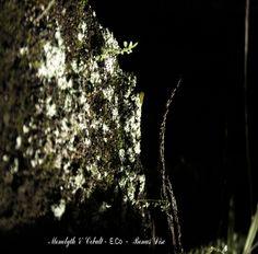"Monolyth & Cobalt - ""E.Co - Bonus Disc"" (ambient, drone, electroacustic, experimental)"