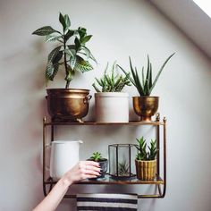 Indoor Hanging Plant Shelves Indoor Hanging Plant Shelves plant stand 42 stirring hanging plant shelf photos concept 1051 X 955 Indoor Hanging Plant Hipster Apartment, Sweet Home, Deco Nature, Plant Shelves, Deco Design, Cool Ideas, Home Living, Living Rooms, Home Decor Trends