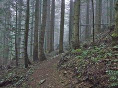 Misty trail.  Rattlesnake Mountain Trail, WA 4/5/14