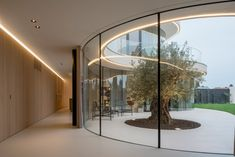Tiers of glazing sweep around a stout olive tree in the garden of this Rotterdam residence by MVRDV, contrasting the almost windowless outer brick walls