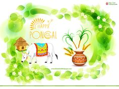 The 14 best pongal wallpapers images on pinterest pongal images pongal greetings wallpapers with wishes quotes m4hsunfo