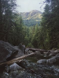 I moved from Indiana to Washington and took a photo of the first state park we passed in WA. Deception Falls [24483264] #reddit