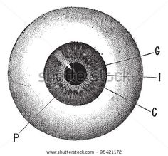 Find Iris Vintage Engraved Illustration Human Eye stock images in HD and millions of other royalty-free stock photos, illustrations and vectors in the Shutterstock collection. Iris Eye, Shelby Car, Spooky Eyes, Realistic Eye Drawing, Engraving Illustration, Medical Illustration, Human Eye, Car Covers, Car Wheels