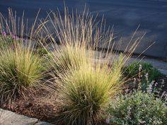New Utah Gardener: The Most Drought-tolerant Waterwise Ornamental Grasses For Utah