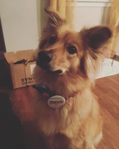 Lily is all about compassion and that's why she is feeling the bern! #feelthebern #notmeus #berniesanders