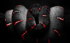 google image serpent  | One Deadly Snake Google Skins, One Deadly Snake Google…