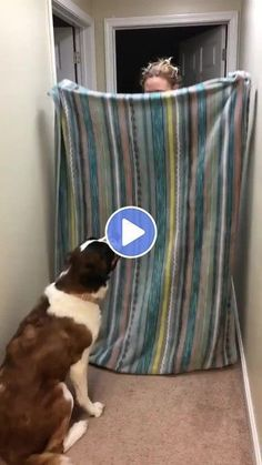 See More Funny Videos Funny Videos, Funny Animal Videos, Funny Animals, Cute Animals, Prank Videos, Humor Videos, Funny Fails, Funny Dogs, Cute Dogs