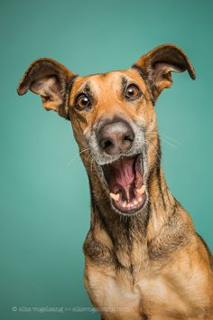 "Hildesheim, Germany-based photographer Elke Vogelsang (a. ""Wieselblitz"") turns her lens toward her three dogs to capture the essence of their vibrant personalities. Vogelsang, whose delightful dog portraits we first shared last March, continues to doc Funny Dogs, Funny Animals, Cute Animals, I Love Dogs, Cute Dogs, Awesome Dogs, Dog Expressions, Dog Portraits, Happy Dogs"
