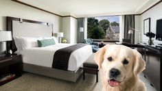 Upscale Pet-Friendly Hotels: Untilrecently, only lower quality hotel chains allowed pets to stay in-room. Now, finding lodging for Fido or Kitty is getting easier. There are moreupscale pet-friendly hotels today, and some even roll out the red carpet for your pet's little paws to enjoy hotel amenities as much as you do. [Read More]