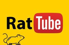 Welcome to iGotRats Rat Care, N Animals, Cute Rats, Animal Crackers, New Tricks, Learn To Read, Channel, How To Plan, Pets
