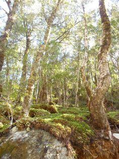 Amazing hikes New Zealand Tui and Rimu Trips #newzealandhikes #tuitrip #rimutrip Routeburn Track NZ