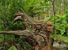A Sculpted Fallen Tree
