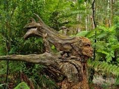 A Sculpted Fallen Tree