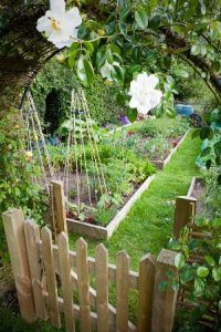 Looking through a rose covered arbour to the organic veg patch, with bean canes, onions, strawberries, broad beans, tomatoes, rhubarb, broad beans, chives, salad, potatoes compost bins etc.