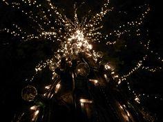 ライトアップの木