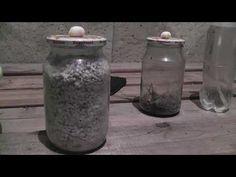 Маточный мицелий шампиньона.1 часть - YouTube