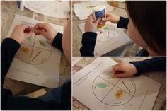 Le cycle de vie du papillon - étapes de réalisation