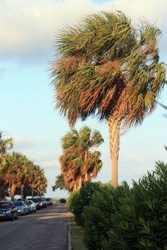 South Carolina Coast - take me there