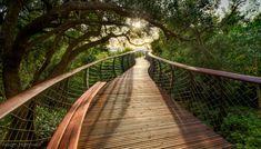 Galeria - Em imagens: uma impressionante passarela elevada na África do Sul - 1