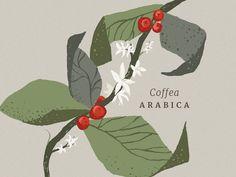 Coffee Illustration Más