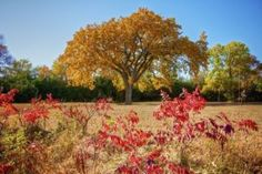 Ready for fall? Here's a 2011 foliage scene from Hartford Beach State Park.