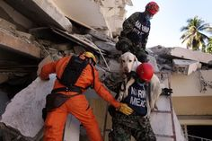 In need of a bit of help. There are places, where search dogs need to be carried, sometimes by people they are not familiar with. Biting is out of question. Search And Rescue Dogs, Dog Search, This Or That Questions, Places, People, People Illustration, Folk, Lugares