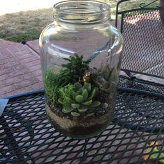 DIY Wednesday: Pickle Jar Terrarium