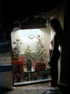 Cheap indoor cannabis garden