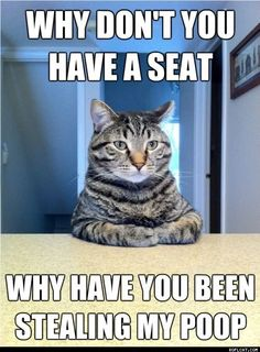 Why Don't You Have A Seat - ROFLCAT Mobile - Funny Cat Pictures
