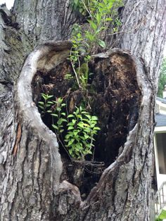 Finding hearts in nature
