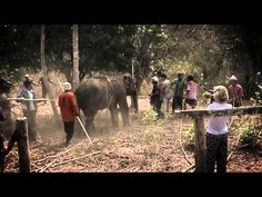Elephant smuggling exposed: UK tourists fuel live elephant trade between Burma & Thailand