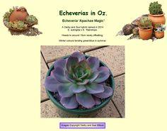 Winter Colors, Echeveria, Succulents, Magic, Colours, Green, Plants, Succulent Plants, Plant