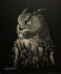 Katy Rewston (scratchboard and airbrush) Color Pencil Sketch, Black Paper Drawing, Graphite Art, Scratchboard Art, Scratch Art, Rabe, Black White Art, Celtic Art, Owl Art