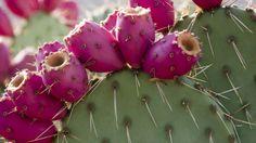 Nieuwe trend: kokkerellen met cactus